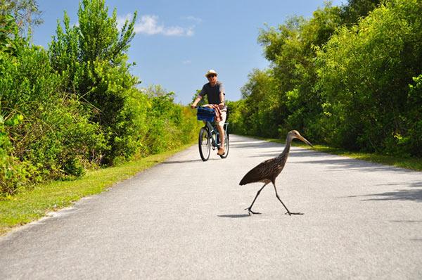 florida-bike-trail