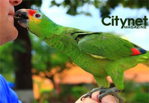 Cozumel Parrot